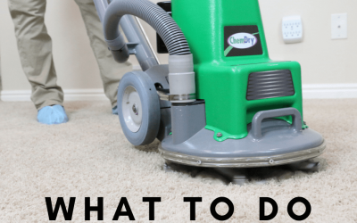 What To Do Before Our Carpet Cleaners Arrive